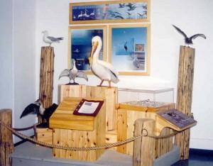 L Wpg VC plover exhibit