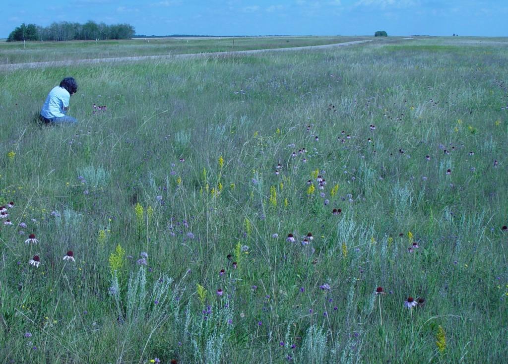 Exploring Mixed Grass Prairie